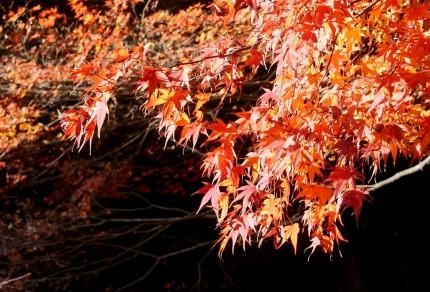 紅葉の養老渓谷