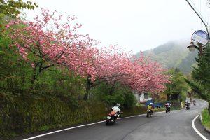 奥多摩ツーリング(桜)