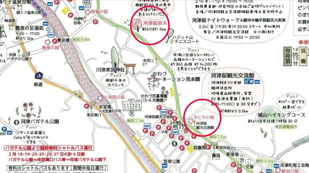 河津桜まつり 会場周辺マップ