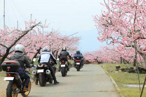 一宮御坂 桃の花