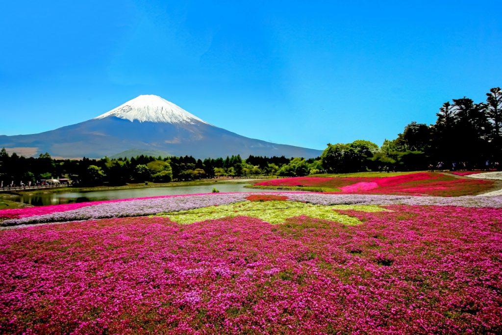 富士山 芝桜 バイク ツーリング
