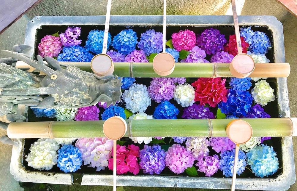 柳谷観音 紫陽花 手水鉢