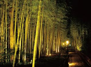 夏の絶景 10位 竹林の小径 伊豆 修善寺