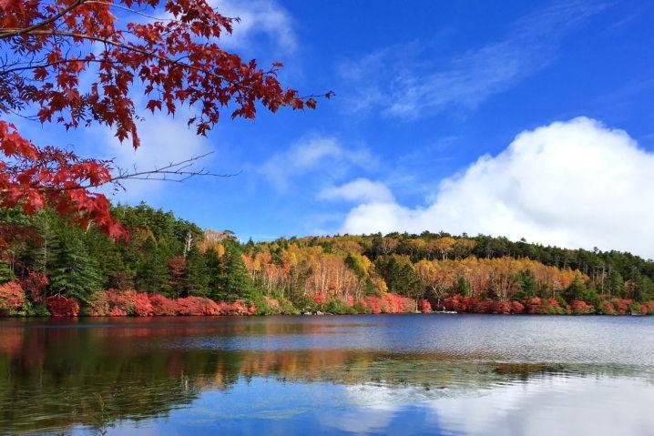 白駒の池 八ヶ岳