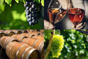 ワイン 収穫祭
