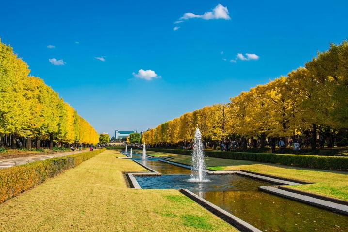 昭和記念公園 いちょう並木