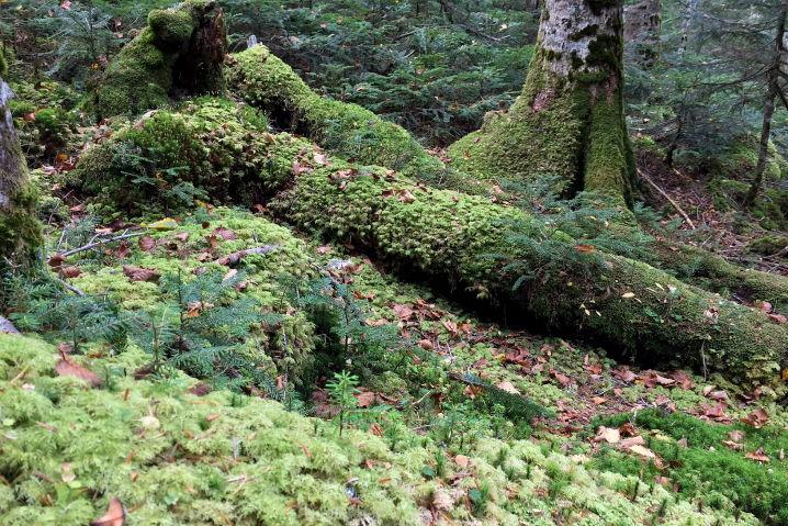 八ヶ岳 白駒の池 苔の森 原生林