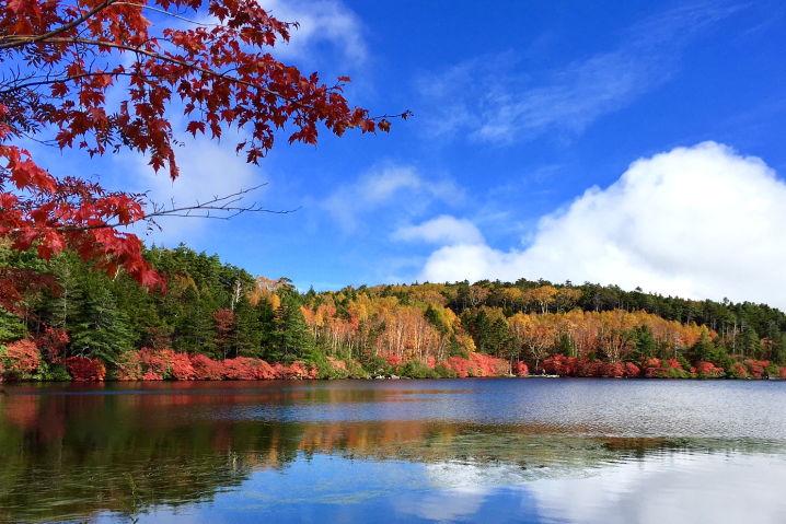 八ヶ岳 白駒の池 ツーリング