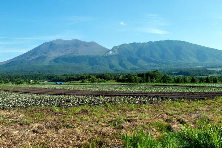 嬬恋(つまごい) 浅間山 キャベツ畑